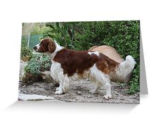 Funky English Springer Spaniel