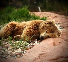 Nap Time by Jim  Egner