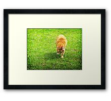 Today, I Hate Everything... Framed Print