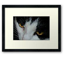 Sabrina's Eyes Framed Print