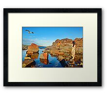 The Shell Seeker ll Framed Print