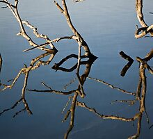 Driftwood at an Early Morning Spring at Lake Burley Griffin in Canberra/ACT/Australia (2) by Wolf Sverak