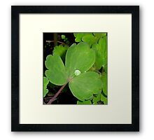 It's Raining Pearls and Opals! Framed Print