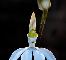 Lady Finger Orchid by Dianne English