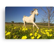 Horse galloping through a field of flowers Canvas Print