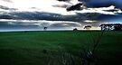 Sun rise at Flinders by Suziemgw