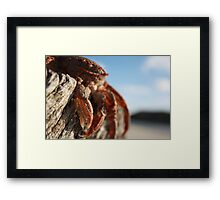 THE CRABS Framed Print