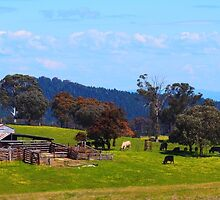 Australian Farm in Spring by Ronald Rockman
