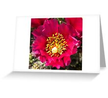Pink Prickly Pear Cactus Flower Macro Greeting Card