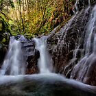 Lets Fall Together ~ Quartzville Creek ~ by Charles & Patricia   Harkins ~ Picture Oregon
