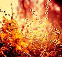 Sunset in my garden. by Beata  Czyzowska Young