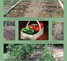 My Vegetable Garden, 2011 by DottieDees