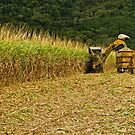 Cane Cutting The Easy Way by TonyCrehan