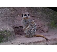 Another Meerkat day Photographic Print