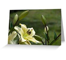 Lily 2 Greeting Card