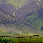 Last Sheep on the Paddock-Lake District by mypic