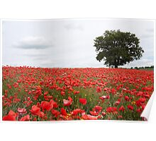 Poppies! Poster
