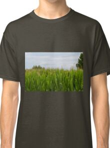 field planted with corn on the cob Classic T-Shirt