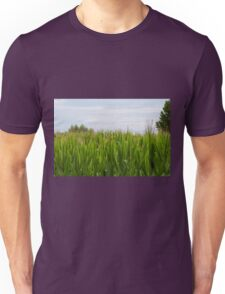 field planted with corn on the cob Unisex T-Shirt