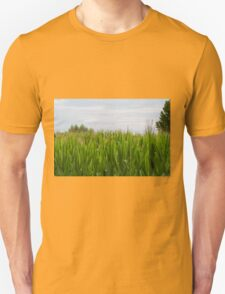 field planted with corn on the cob T-Shirt
