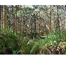 Boranup Forest - Leeuwin-Naturaliste National Park Photographic Print