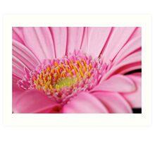 Light Pink Gerbera  Art Print