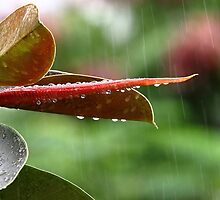 On a rainy day # 5 by debjyotinayak