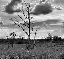 Tree Lingering by Richard Burton