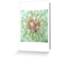 Dandelion Seed Head Greeting Card