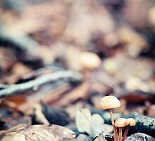 Signs of Autumn by Michaela Rother