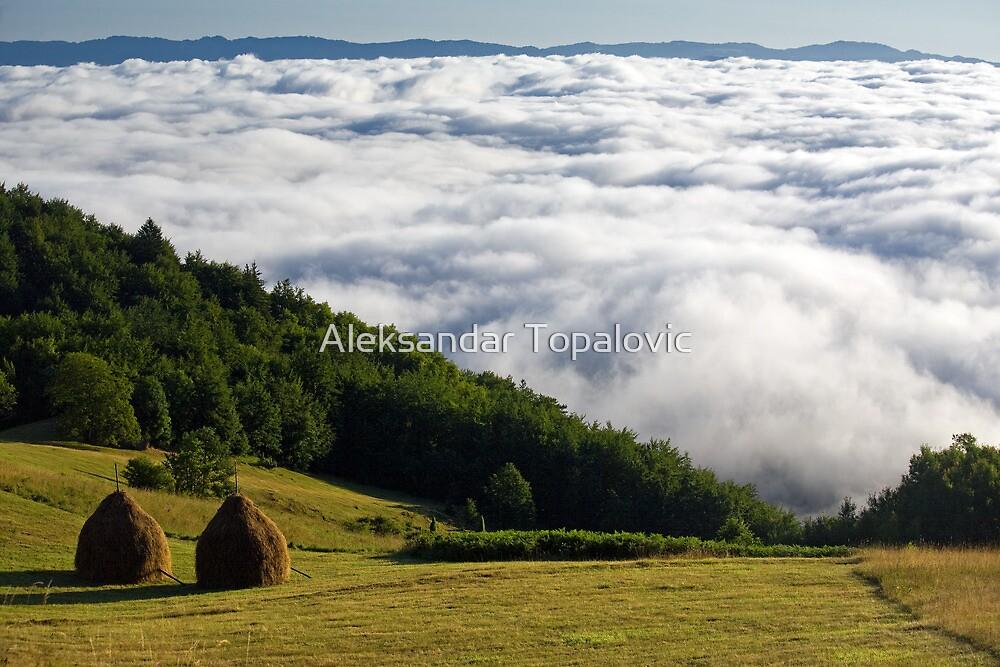 National Park Tara - clouds down!  by Aleksandar Topalovic
