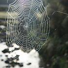 Morning Dew  by Daniel  Archer