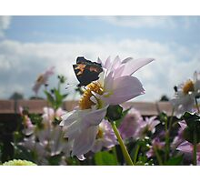 Butterfly chair  Photographic Print
