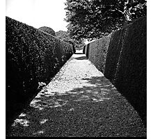 Contrasting Paths Photographic Print