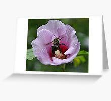 Flower Buzz Greeting Card
