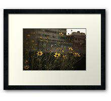 High Line Park Flowers Framed Print