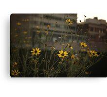 High Line Park Flowers Canvas Print