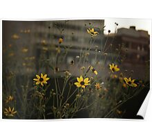 High Line Park Flowers Poster