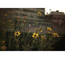 High Line Park Flowers Photographic Print