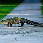 Alligator Crossing Alert by Joe Jennelle