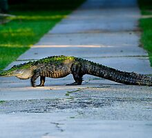 Alligator Crossing Alert by Joe Jennelle