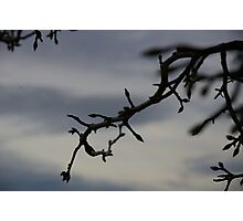Hint Of Spring, On A Grey And Frosty Morning Photographic Print