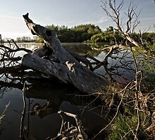 Driftwood at an Early Morning Spring at Lake Burley Griffin in Canberra/ACT/Australia (4) by Wolf Sverak