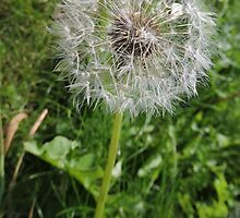 Do You See Weeds Or Wishes?  by CreativeEm