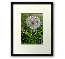Do You See Weeds Or Wishes?  Framed Print