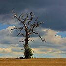 Tree #10 by Matthew Floyd