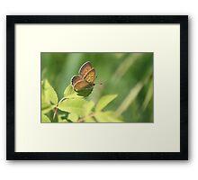 Precious Butterfly Framed Print