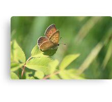 Precious Butterfly Canvas Print