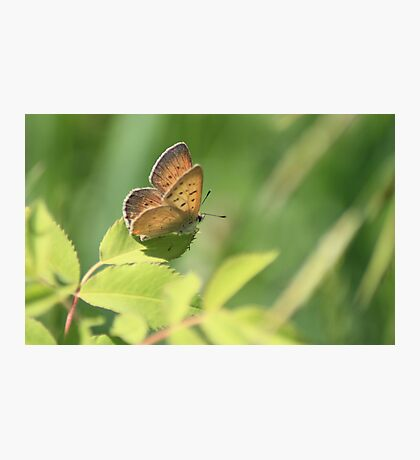 Precious Butterfly Photographic Print