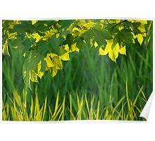 Summer Greens Poster